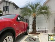 存在感のあるココスヤシ!リゾート感あふれる前庭テラスと駐車場!